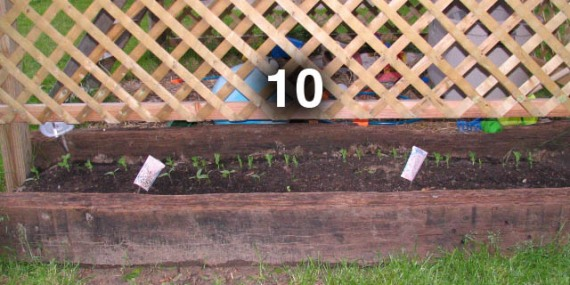 Bed 10 is an 8 foot wide narrow bed planted with a double row.  Cucumbers and snow peas will climb the lattice.