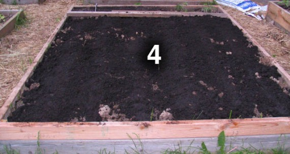 Bed 4 is seeded with bush green beans, beets and carrots.