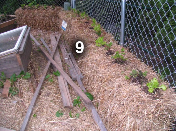 Bed 9 is a row of straw bales planted with lettuce and a couple extra herbs.