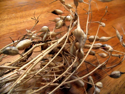 Dried radish seed pods