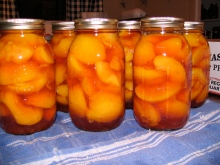 Quarts of Home-Canned Peaches (Coralstar variety)