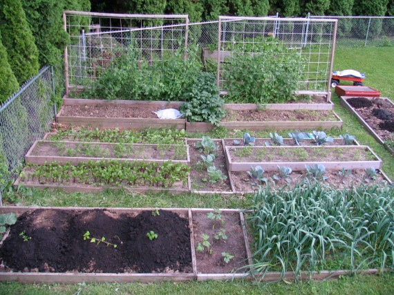 Garden overview in Early May