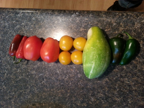Red mild jalapenos, Roma and Ester Hess tomatoes, a random cucumber and green mild jalapenos